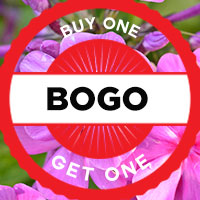 BOGO Promotion Niagara Flowers