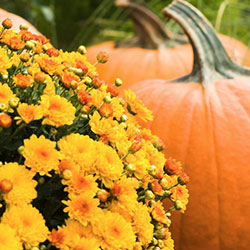 Fall Garden Guide Niagara