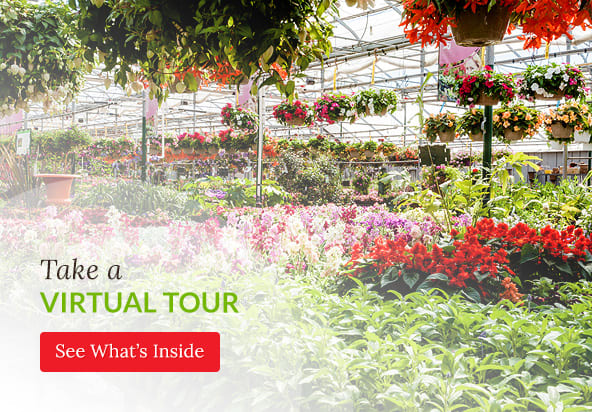 Take a Virtual Tour, Country Basket Garden Centre