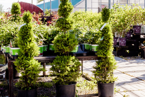 Trees & Shrubs, Niagara Garden Centre